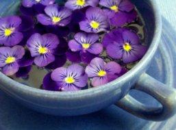 violets 13
